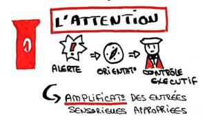 1er pilier de l'apprentissage : l'attention